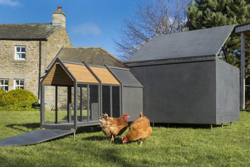 Itt akarnál lakni, ha csirke vagy