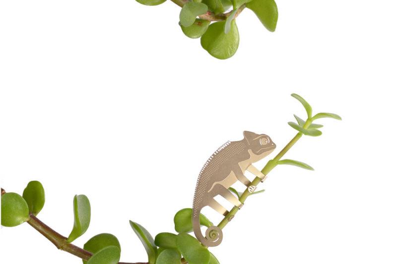 Cukiállatka növénydíszek